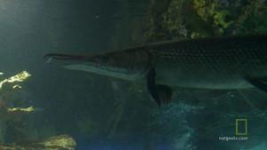 Aquarium Bilde