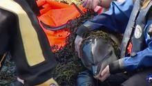 Misterul delfinilor eșuați documentar