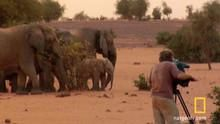מלכודת הפילים תוכנית