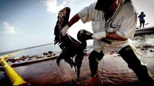 Sauvés de la marée noire photo
