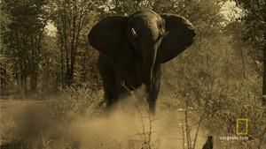 Elephant Shoot photo