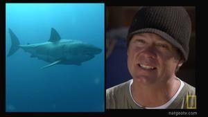 Malibu Shark Hunting photo