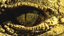 Întâlnire cu crocodilul documentar