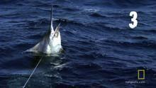 דג משוגע תוכנית