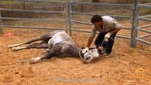 Het temmen van wilde paarden Programma