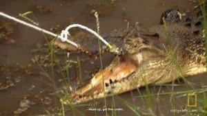 Wild Croc Catch video