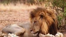 L'armée des lions Voir la fiche programme