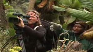 Gorilles photo