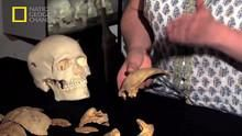 Glittering Saxon Relics show