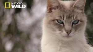 Die Lady mit den 700 Katzen Foto