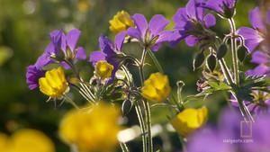 Jarní tání fotografie
