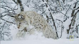 Skandinávská divočina fotografie