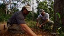 Capcane pentru jaguari documentar