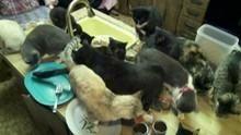 La femme aux chats Voir la fiche programme