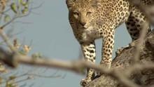 L'île aux léopards Voir la fiche programme