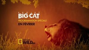 Projet Big Cat photo