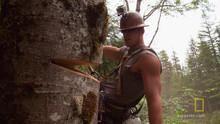 RockStarsDeathtrap_11359_cliffside-logging show