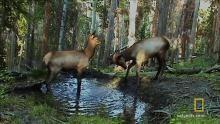 Godišnji sukob losova  emisija