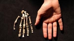 A kétmillió éves fiú fotó