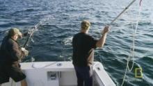 A Fisherman's Wisdom show