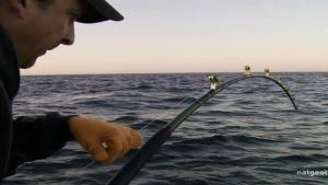 Nachhaltigkeit: Fischereiregulierungen Foto