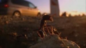 La cité des fourmis photo