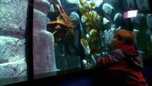 Les rois des aquariums Voir la fiche programme