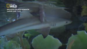 Ryba na pokaz zdjęcie