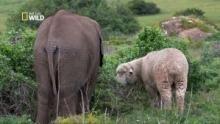 Un éléphant adopté par un mouton Voir la fiche programme