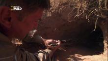 La capture du python géant. Voir la fiche programme