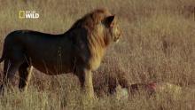 La chasse à la gazelle Voir la fiche programme