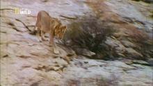 Des hommes et des lions Voir la fiche programme