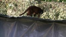 Un refuge pour les chats Voir la fiche programme