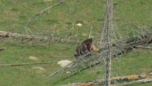 Aflevering Grizzly Bear: de eerste jacht Programma