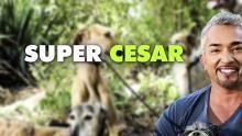 Bande Annonce 2 Super César Voir la fiche programme