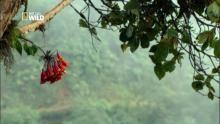 A la vitesse du colibri : Le surplace Voir la fiche programme