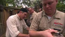 Mesurer un python géant Voir la fiche programme