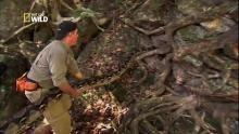 Capturer un python géant Voir la fiche programme