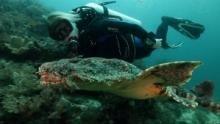 Bande annonce du Top 10 des requins les plus extraordinaires Voir la fiche programme