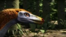 The Feathered Dinosaur show
