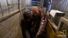 Vinnie jako inseminátor krav pořad