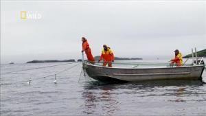 Les différents types de pêches aux saumons photo