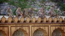Maimuţe la furat: Episodul 3 documentar