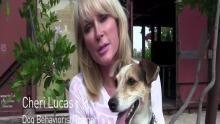 Video Blog - La pazzia di mambo programma