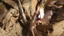 Assassini insuperabili - Nella giungla programma