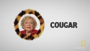 Image result for betty white cougar