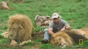 Lion and Human in Harmony photo