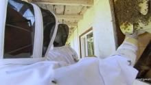 Bienenkönig Programm