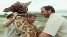 Giraffengeburt Programm