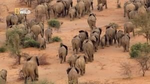 La migration des éléphants photo
